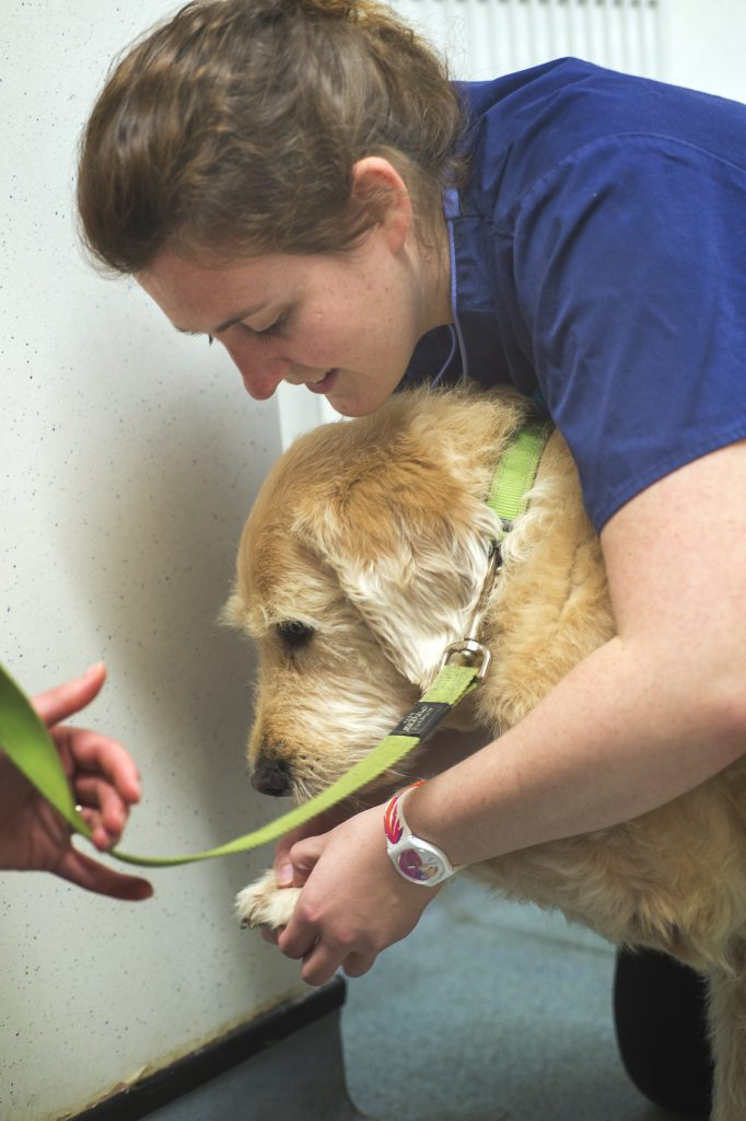 Melanie Farmer Veterinary Surgeon
